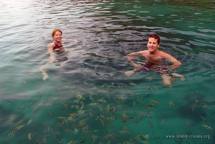Afternoon Yacht Charter - Snorkeling is amazing around Koh Tao